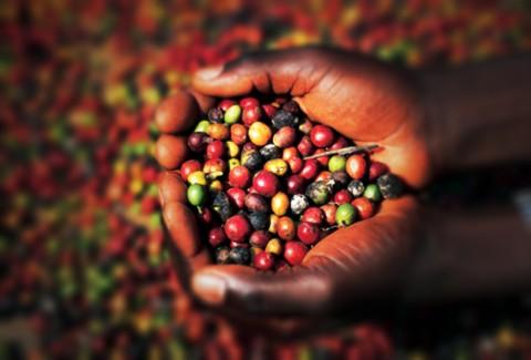 coffee-varieties